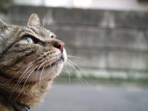 委員長-猫.jpg